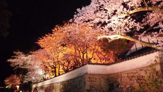 三井寺夜桜2.jpg
